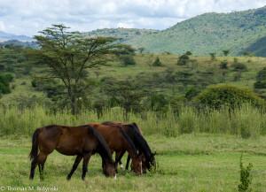 Horses at Lolldaiga Hills Ranch