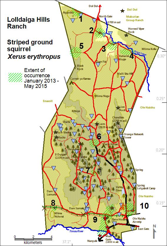 DeJong & Butynski - LHL - stri grn squirrel