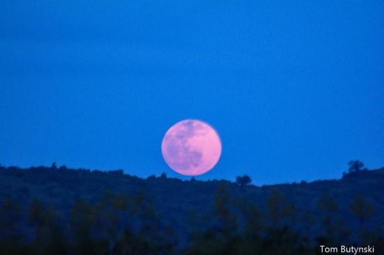 Blue moon, Lolldaiga Hills Ranch, Kenya. Photograph taken by Tom Butynski
