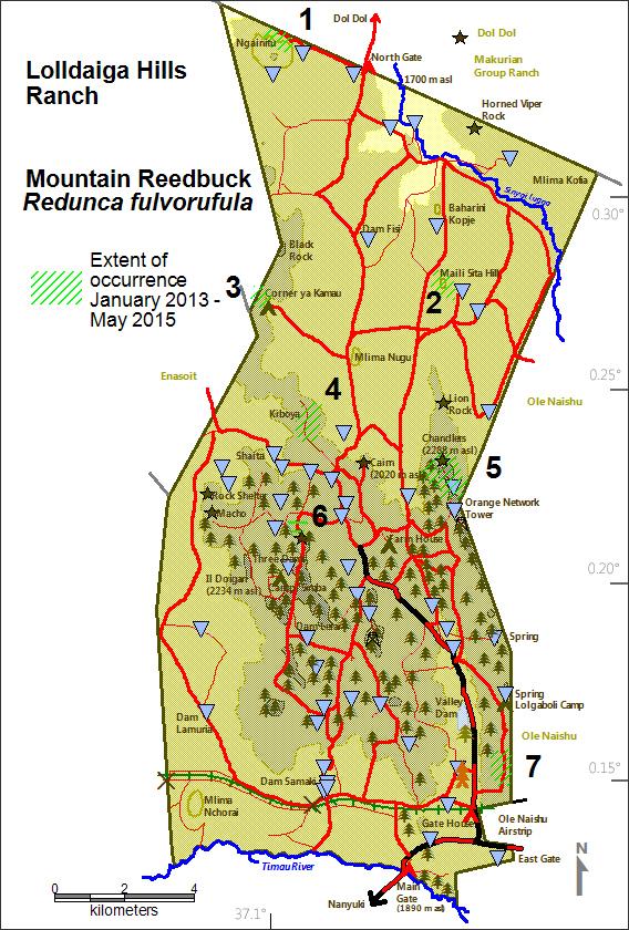 DeJong & Butynski - LHL - Mountain reedbuck